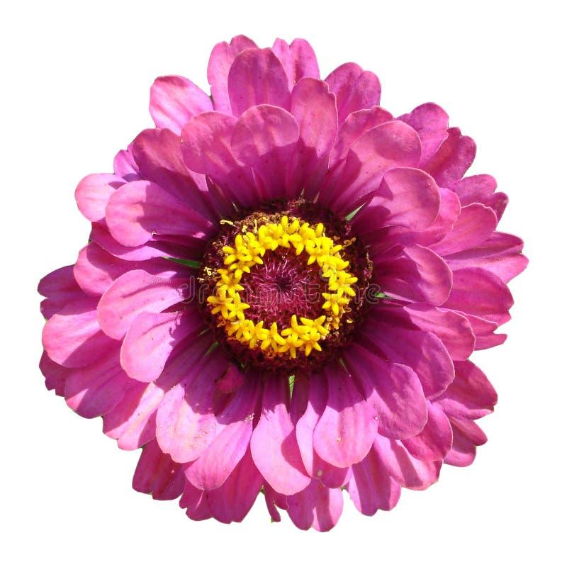 Instruction-macro d'une fleur photo libre de droits
