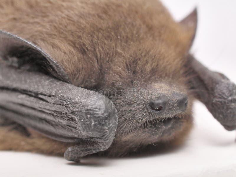 Instruction-macro de 'bat' photos libres de droits