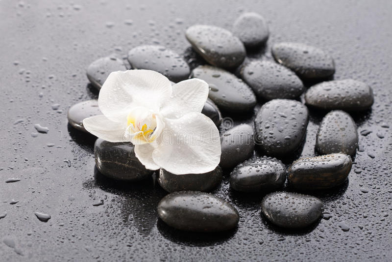 Instruction-macro de belle orchidée photo libre de droits
