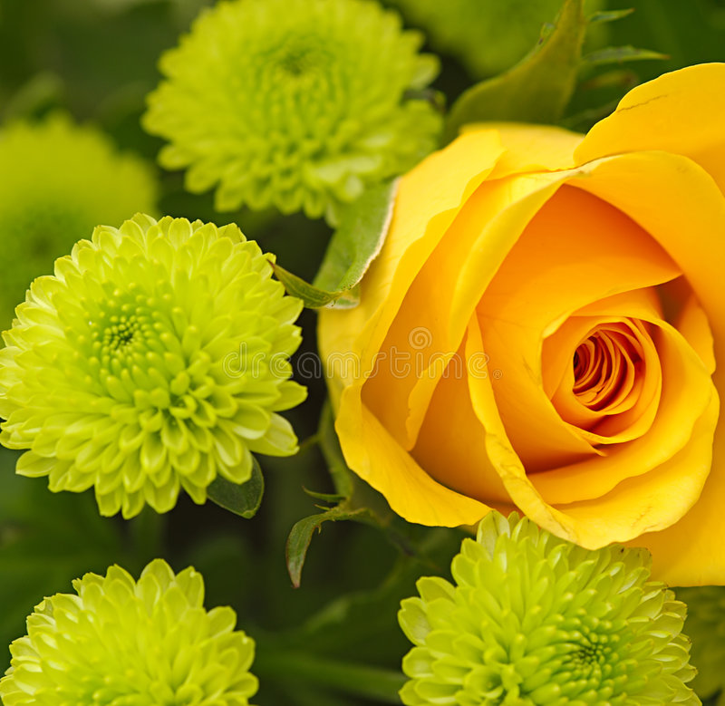 Instruction-macro de bouquet photographie stock libre de droits