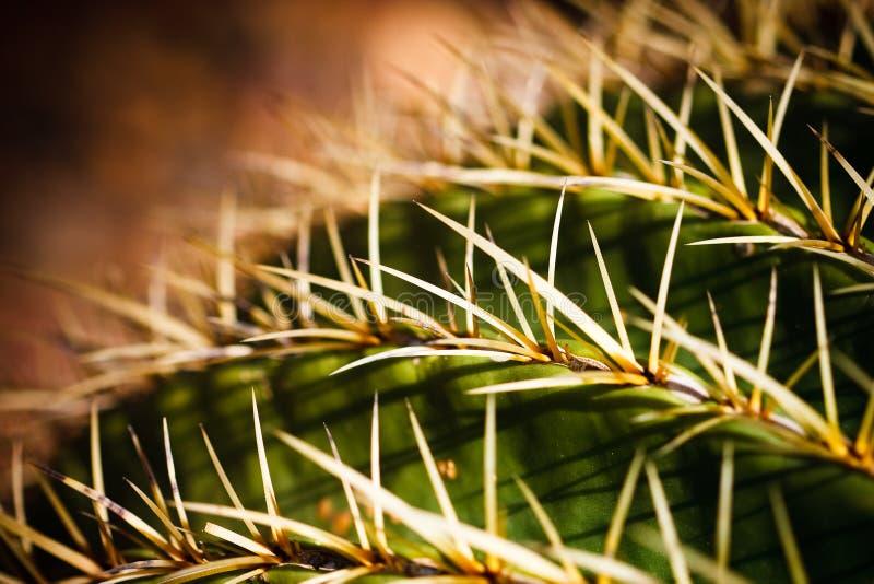 Instruction-macro de cactus de baril d'or photos stock