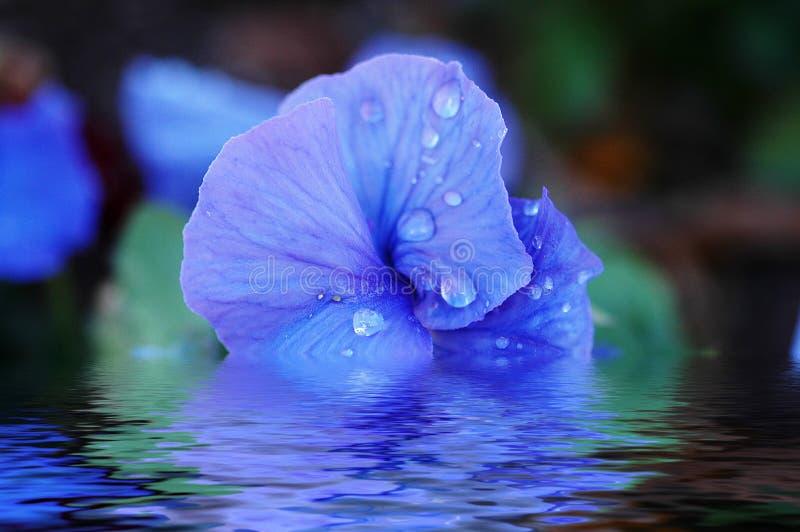 Instruction-macro de fleur photos stock