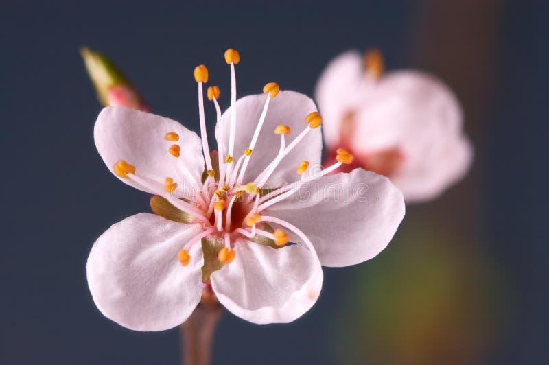 Instruction-macro de fleur photo libre de droits