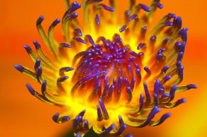 Instruction-macro de fleur photos libres de droits