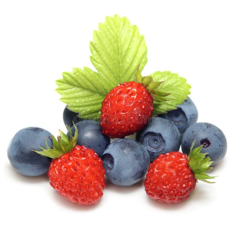 Instruction-macro de fraisier commun et de myrtille photos stock