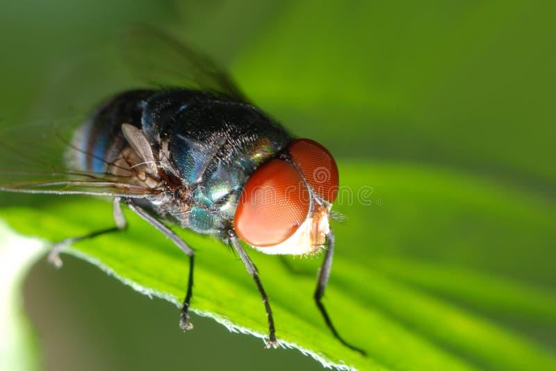 Instruction-macro de mouche d'insecte images libres de droits