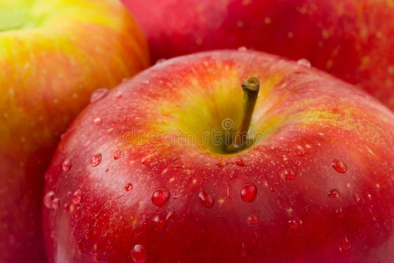 instruction-macro de pomme photographie stock libre de droits