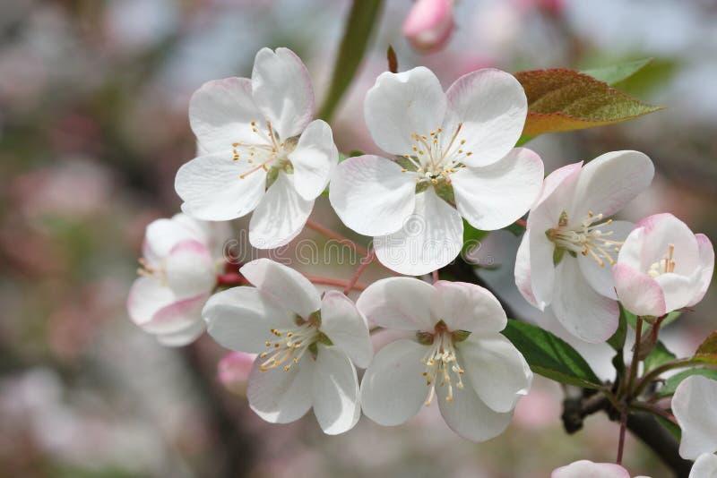 Instruction-macro de printemps photographie stock libre de droits