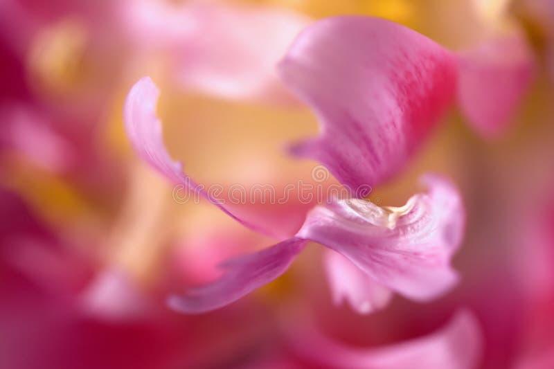 Instruction-macro des pétales de tulipe photographie stock