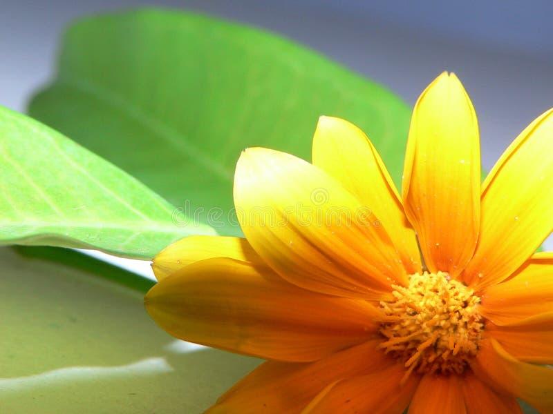 Instruction-macro jaune de fleur photo stock