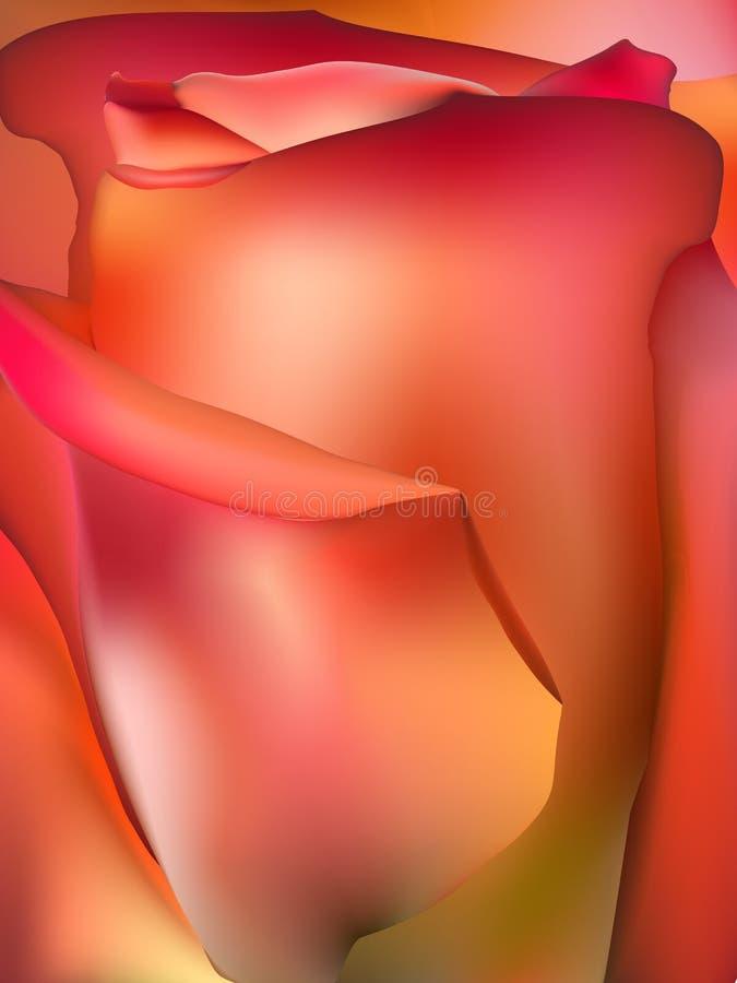 Instruction-macro orange de Rose ENV 10 illustration stock