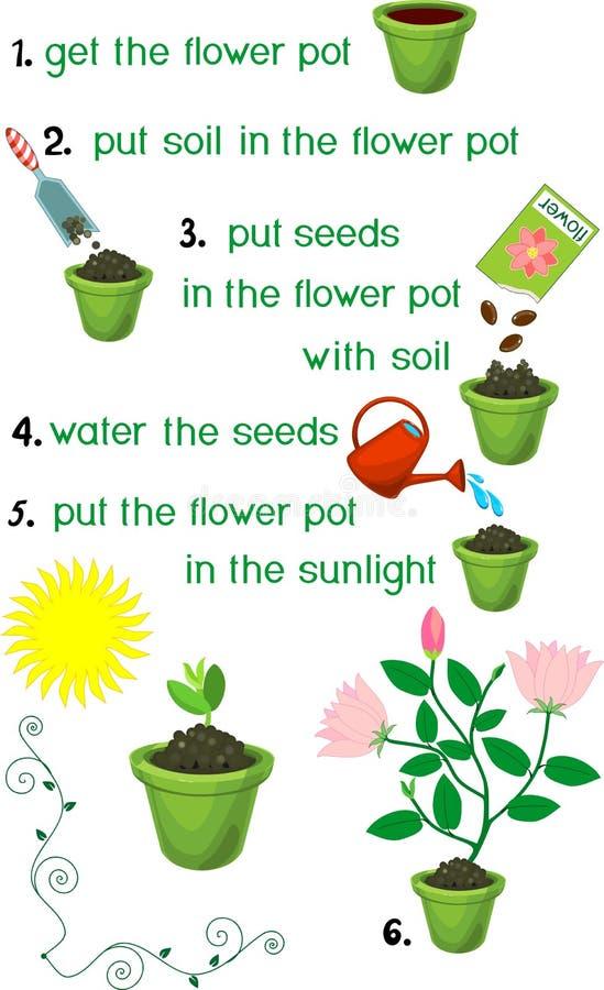 Instructions sur la façon dont planter la fleur dans l'ordre des étapes illustration de vecteur