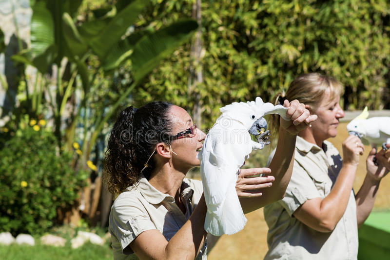 Instructor de la mujer que sostiene loros de cacatúa Demostración de los loros foto de archivo libre de regalías