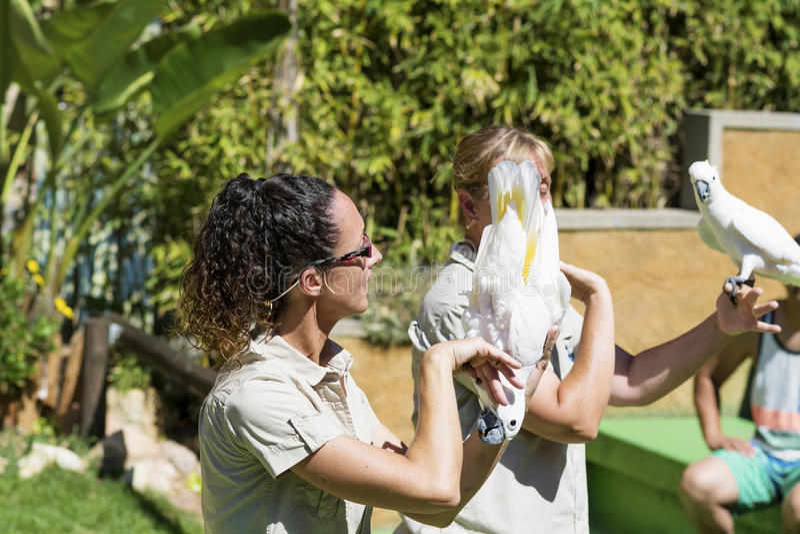 Instructor de las mujeres que sostiene loros de cacatúa Demostración de los loros imagenes de archivo