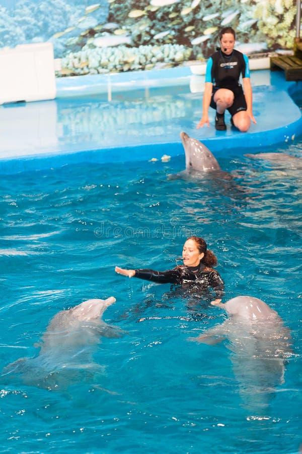 Instructores y delfínes que se realizan en Dolphinarium foto de archivo