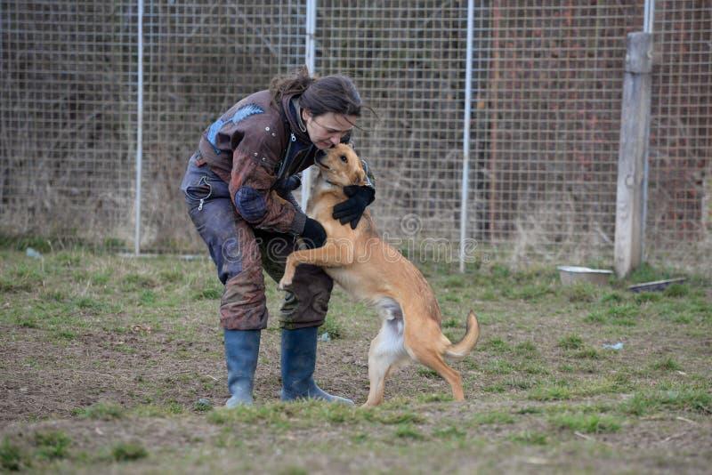 Instruktör och hennes hund i processen av socialization arkivfoton