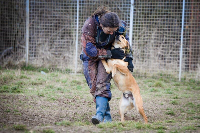 Instruktör och hennes hund i processen av socialization royaltyfria foton