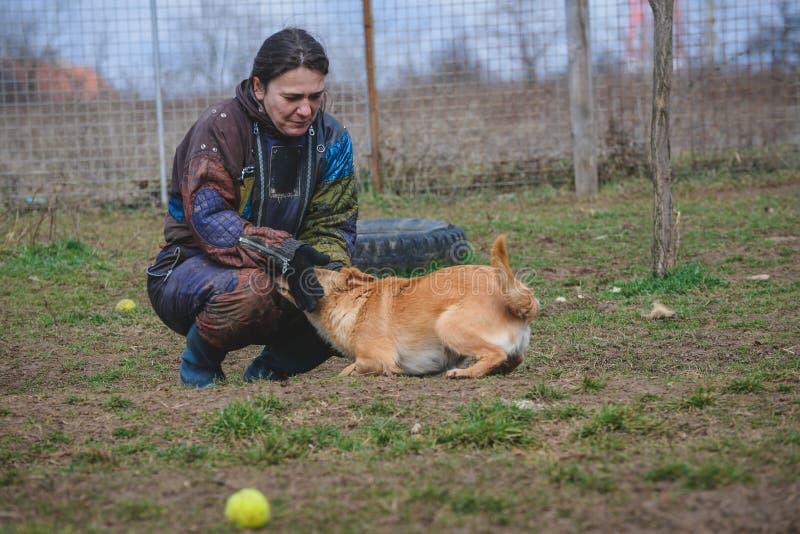 Instruktör och hennes hund i processen av socialization arkivbild