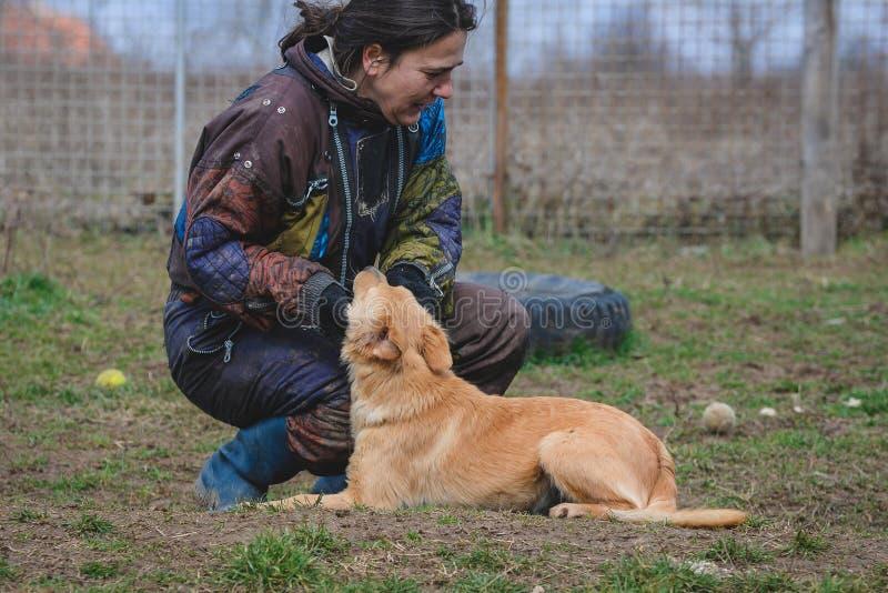 Instruktör och hennes hund i processen av socialization royaltyfri bild