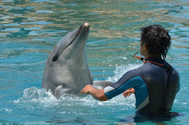 Instruktören påverkar varandra med delfin arkivfoton