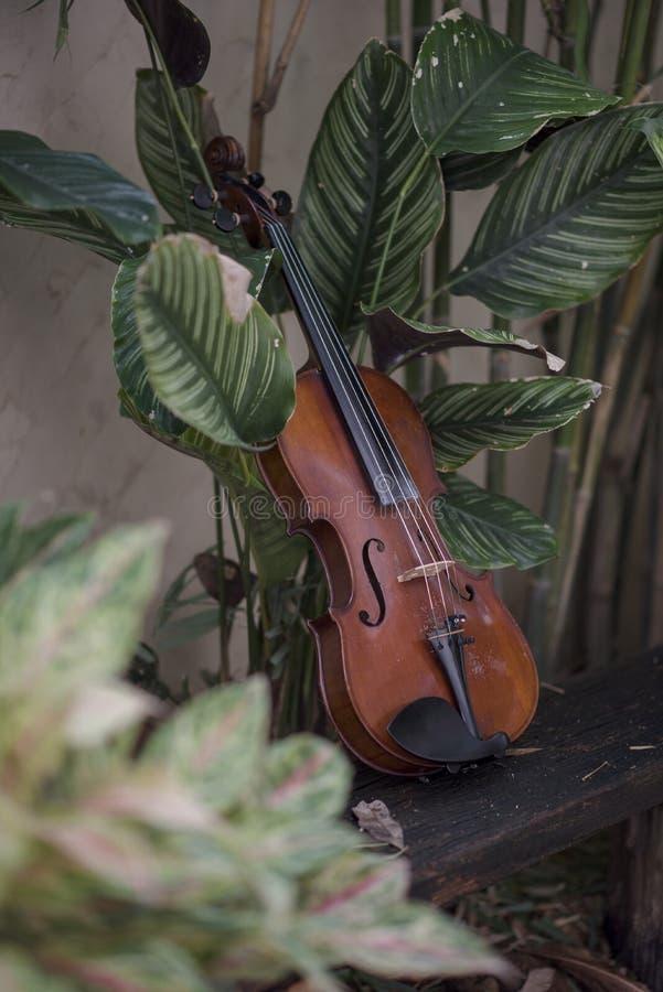 Instrument classique de violon vertical avec le fond naturel image libre de droits