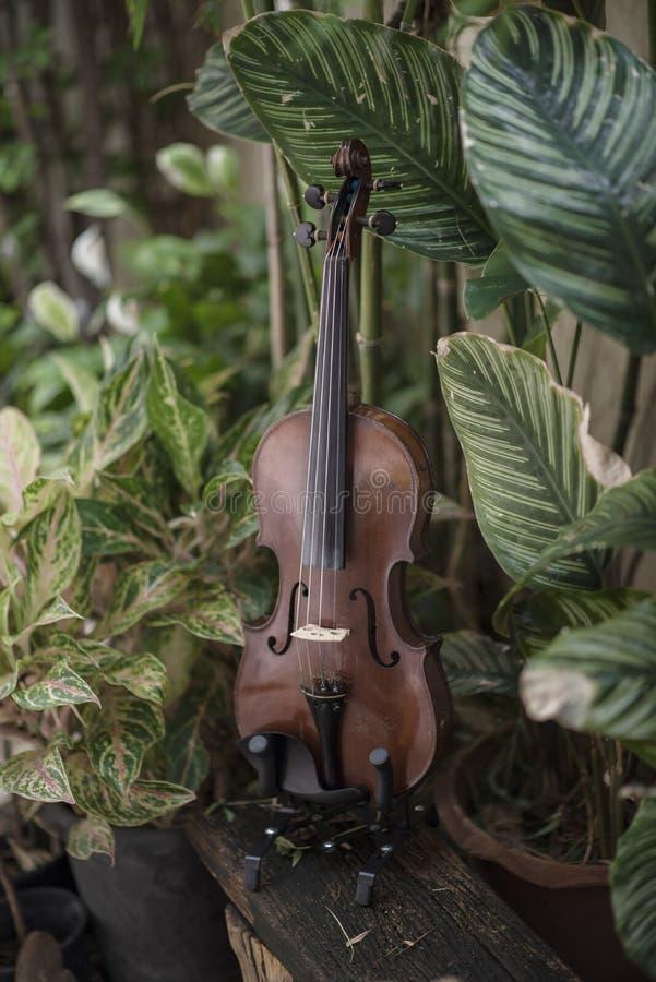 Instrument classique de violon vertical avec le fond naturel photographie stock libre de droits