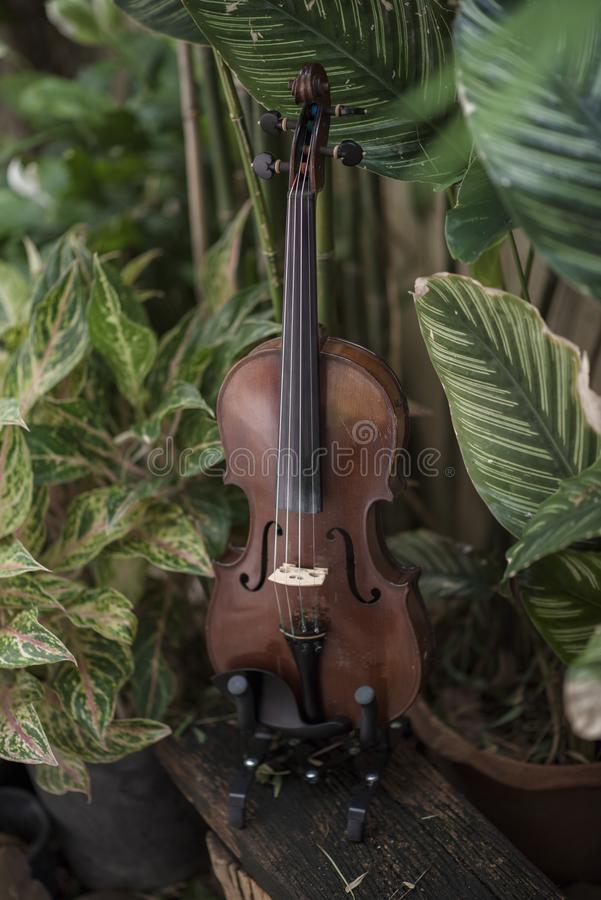 Instrument classique de violon vertical avec le fond naturel image stock