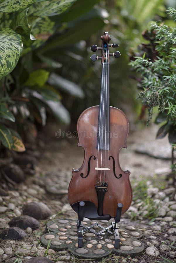 Instrument classique de violon vertical avec le fond naturel photo stock