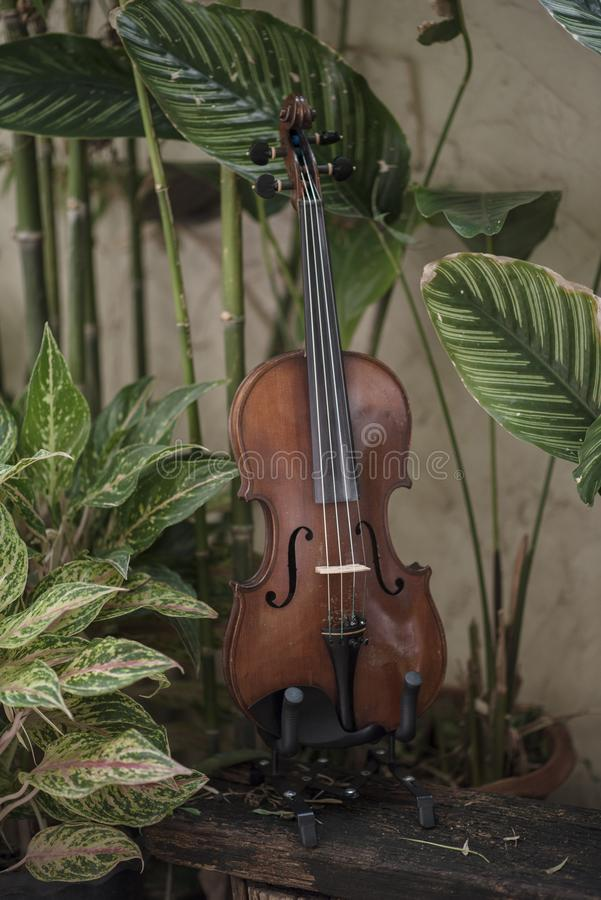 Instrument classique de violon vertical avec le fond naturel photographie stock