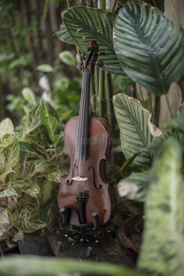 Instrument classique de violon vertical avec le fond naturel images libres de droits
