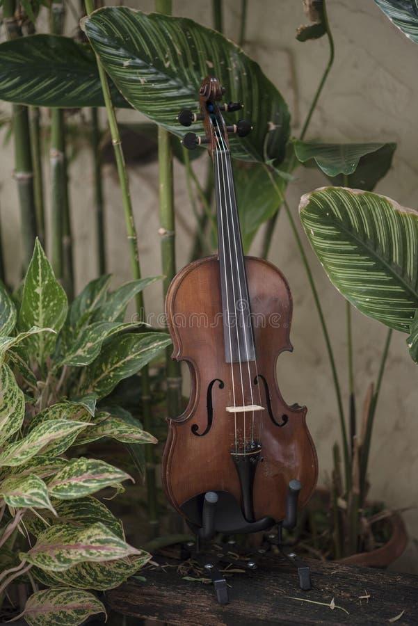 Instrumento cl?ssico do violino vertical com fundo natural foto de stock royalty free