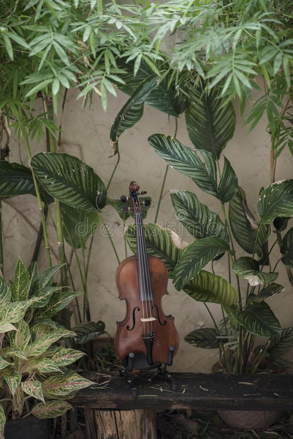 Instrumento cl?ssico do violino vertical com fundo natural fotos de stock