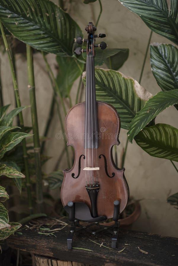 Instrumento cl?ssico do violino vertical com fundo natural foto de stock