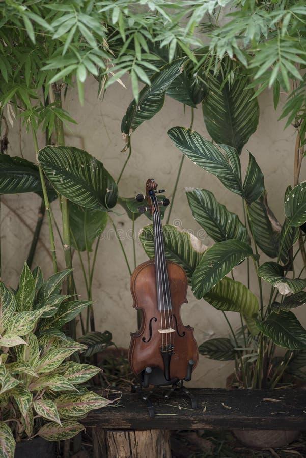 Instrumento cl?ssico do violino vertical com fundo natural imagem de stock royalty free