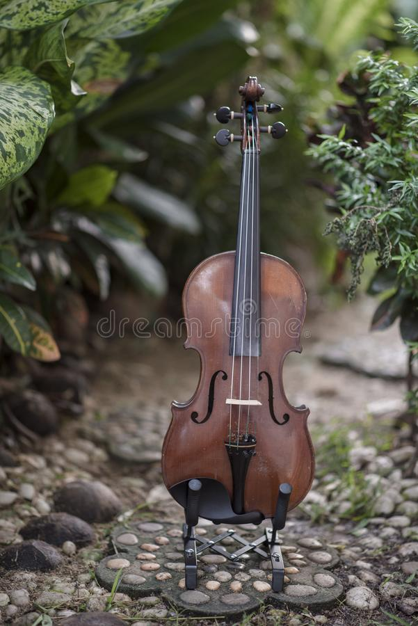 Instrumento cl?ssico do violino vertical com fundo natural foto de stock