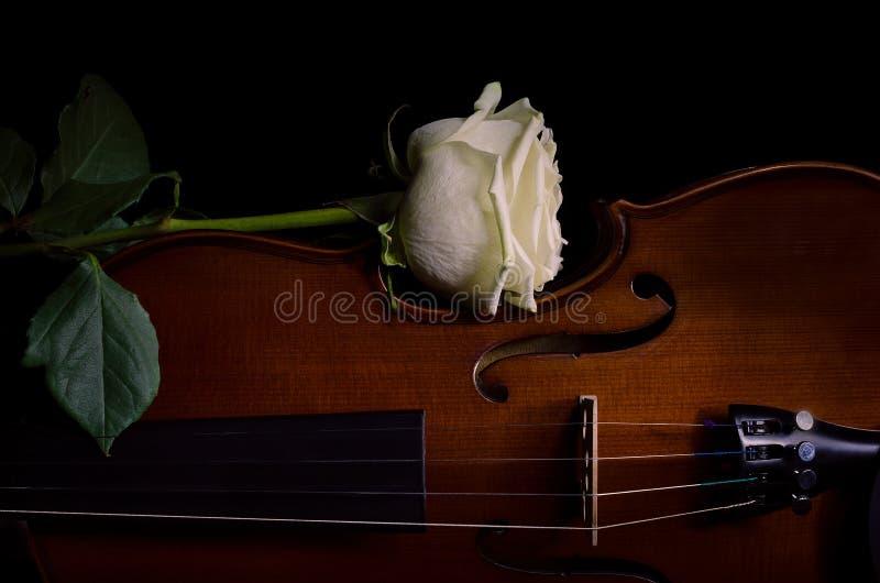 Instrumento de música do violino da orquestra com rosa do amarelo imagens de stock