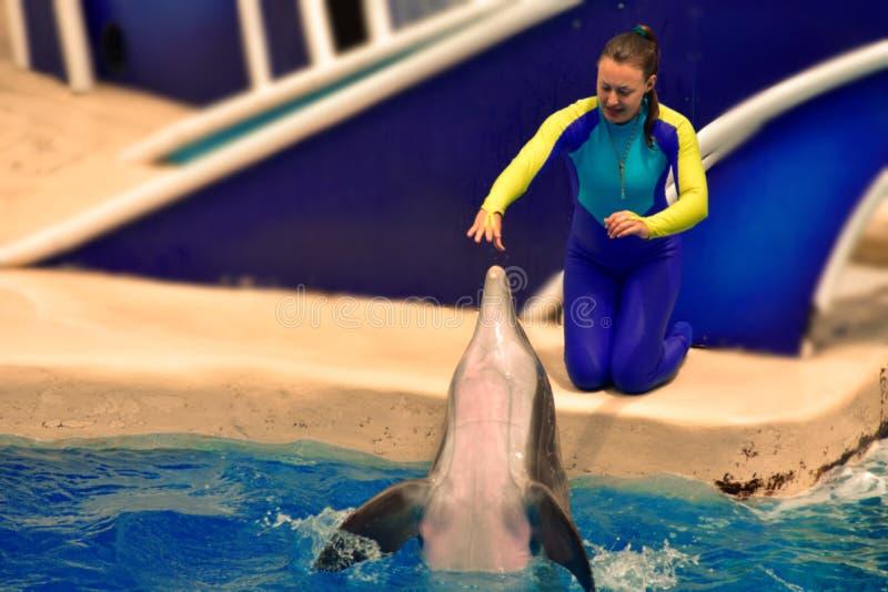 Instrutor da menina interativo com o golfinho agradável no mundo do mar fotos de stock royalty free