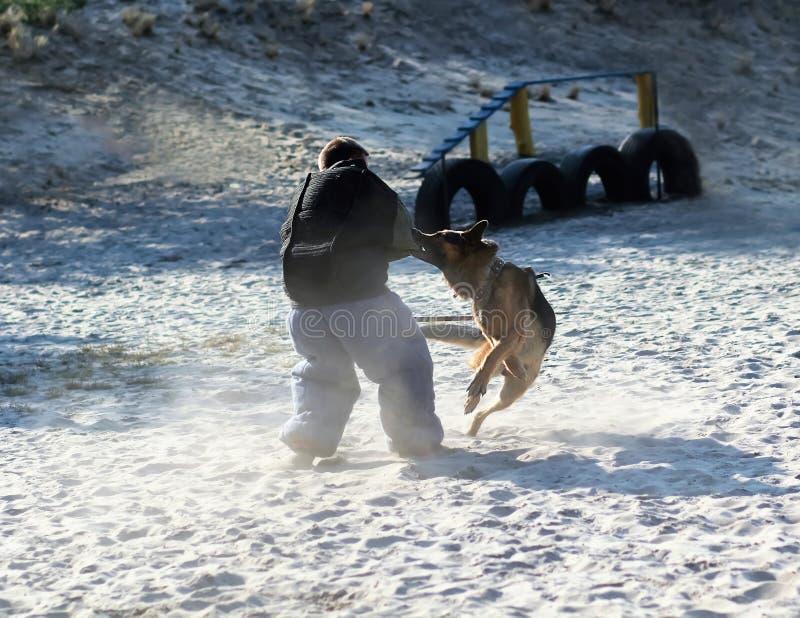 Instrutor de cão no terno da mordida k9 na ação Classe de treinamento no campo de jogos para um cão-pastor alemão Ataque do ` s d imagens de stock
