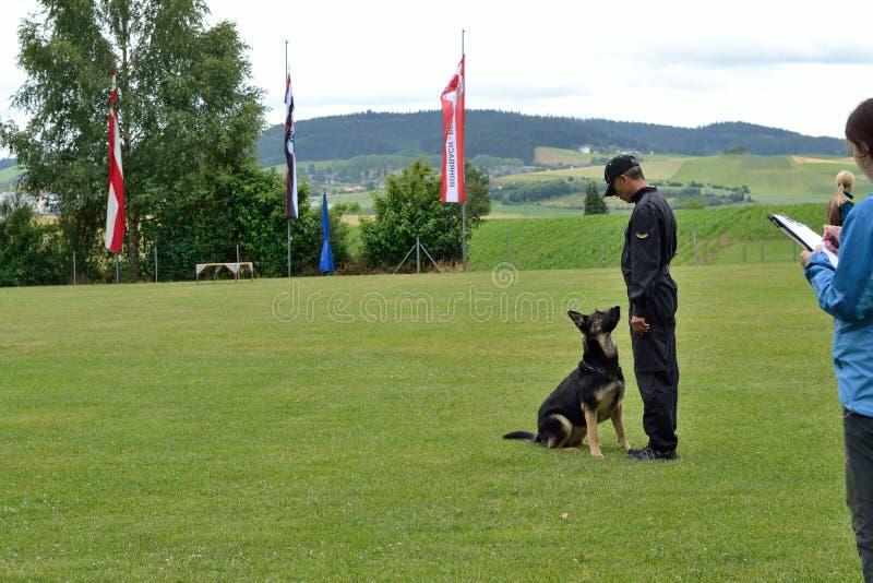 Instrutor de cão treinado com pastor alemão fotografia de stock