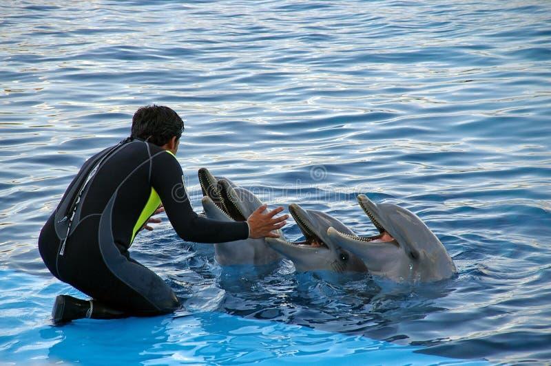 Instrutor do golfinho fotografia de stock