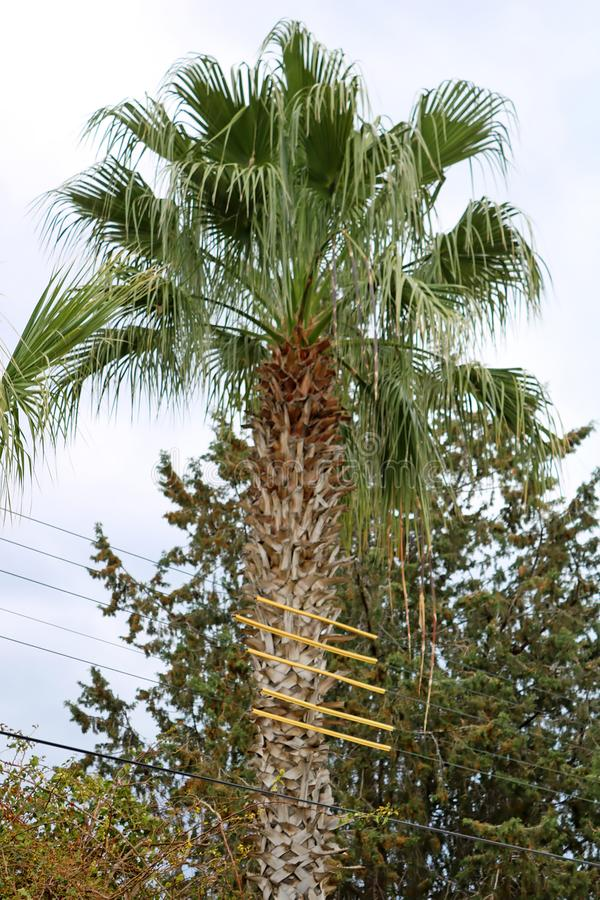 Insulated electrical wires from palm tree, Larnaca, Cyprus royalty free stock photography