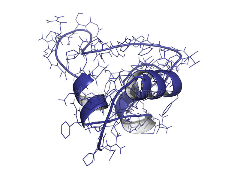 Insulina-como el factor de crecimiento (IGF-1, somatomedin C) stock de ilustración