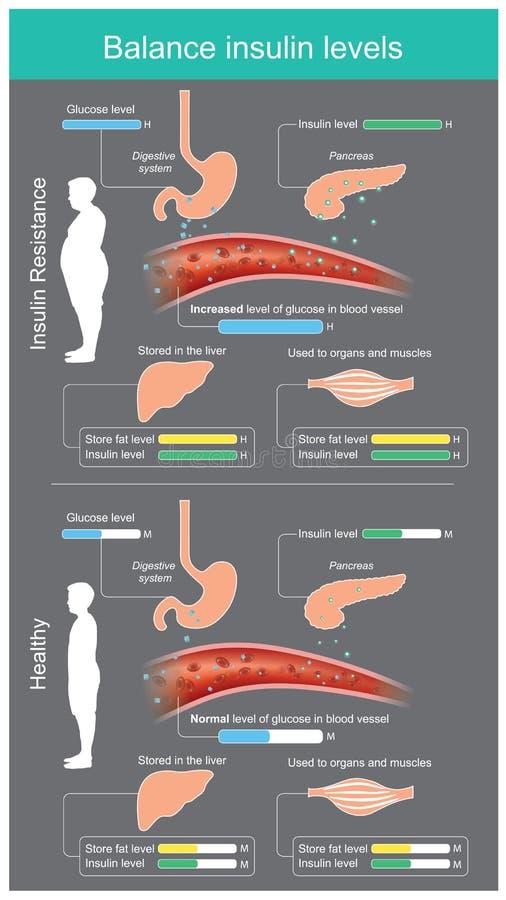 A insulina no corpo saudável traz a glicose no córrego do sangue para apropriado, o excesso da glicose será armazenado no fígado  ilustração do vetor