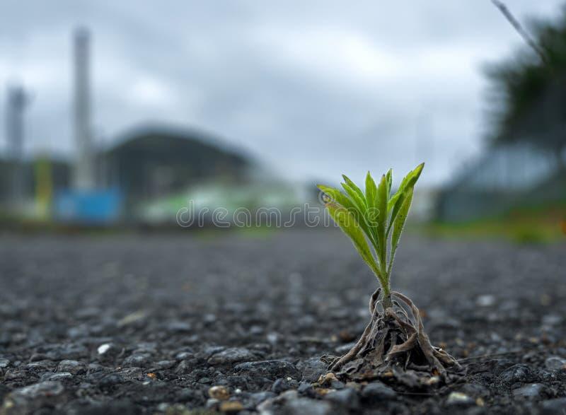 Insurreição do asfalto fotos de stock royalty free