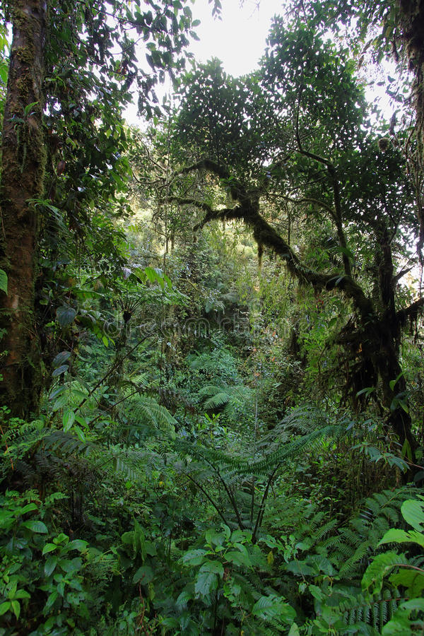 Intérieur de cloudforest humide image libre de droits