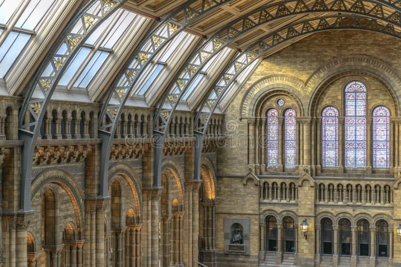 Intérieur de musée d'histoire naturelle, Londres images libres de droits
