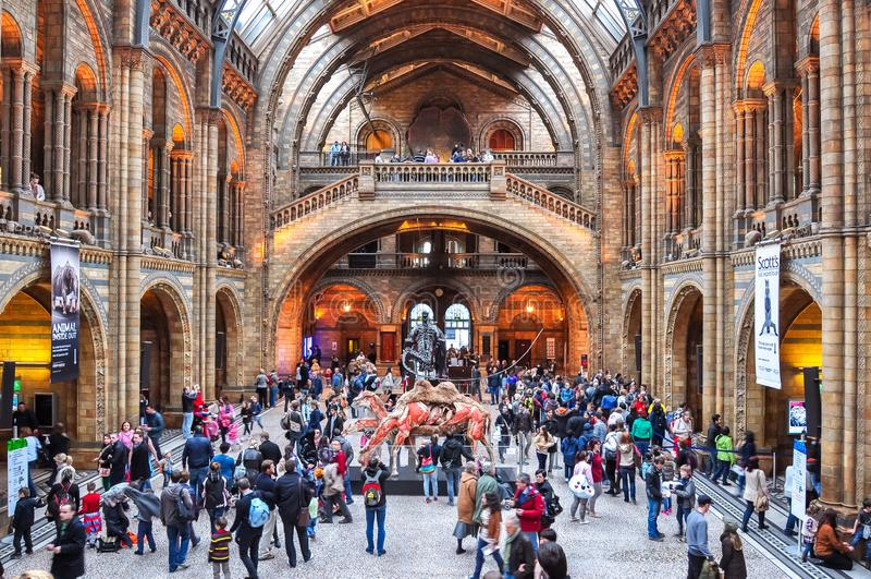 Intérieur de musée d'histoire naturelle, Londres, R-U photo libre de droits