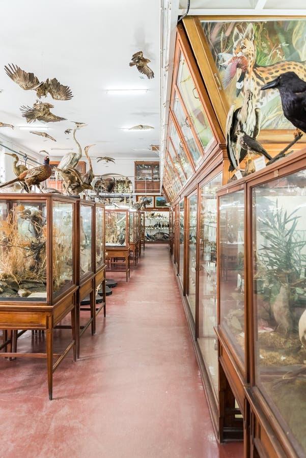 Intérieur de musée zoologique de Cluj images stock