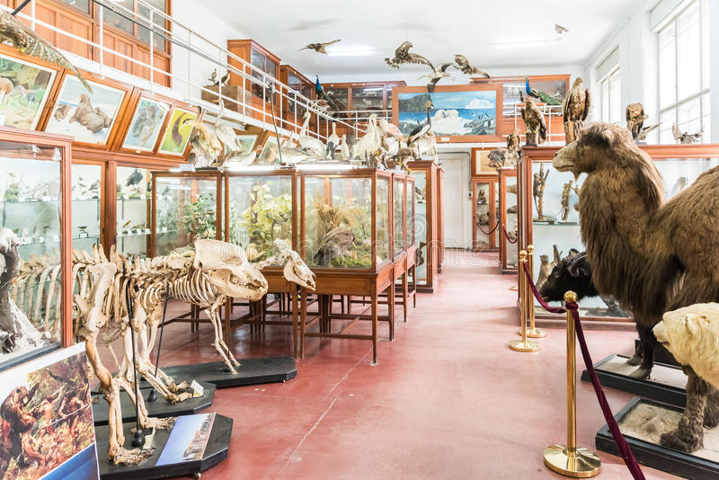 Intérieur de musée zoologique de Cluj photos libres de droits