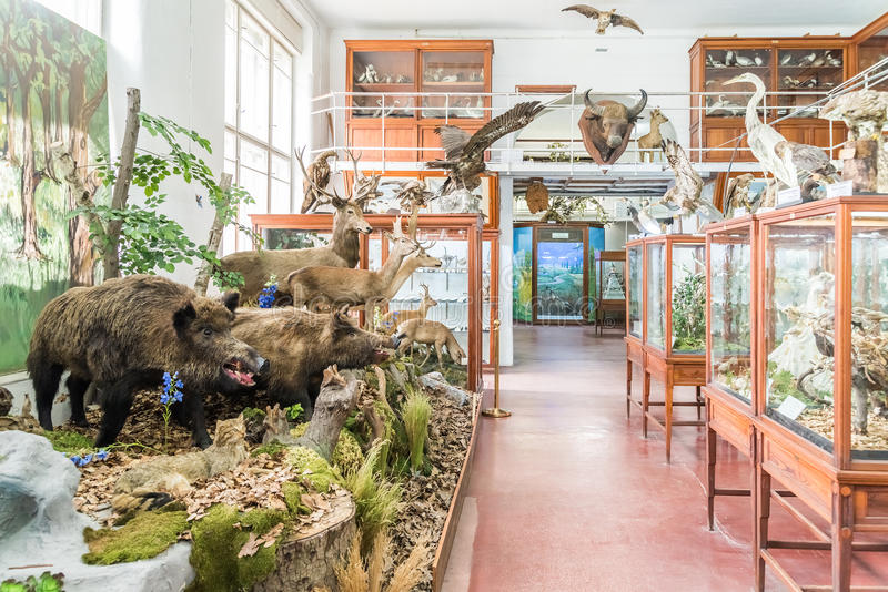 Intérieur de musée zoologique de Cluj photo stock
